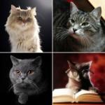 001 daje słowo odpowiedzi kot