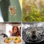 008 daje słowo odpowiedzi pająk