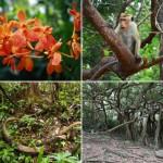183 daje słowo odpowiedzi dżungla