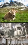 276 przeciwienstwo hodowla przemysł